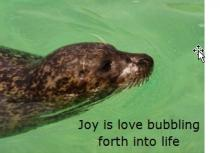 Joy is love bubbling forth into life